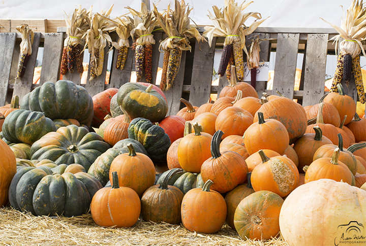 Tradition: Etienne Farm Market Pumpkins